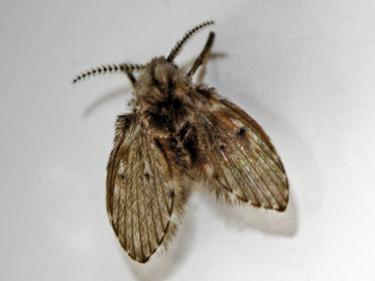 Control de plagas de moscas pequeñas